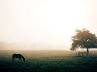 Horse in fog in Bloomington, IN